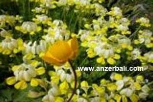 anzer8 (53)