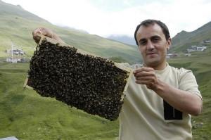 Arılarımız anzerbalı için çalışıyor