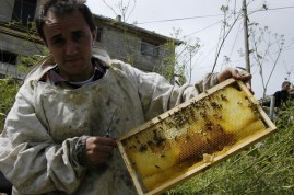 Arılarımız iş başında
