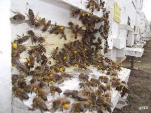 organik polen