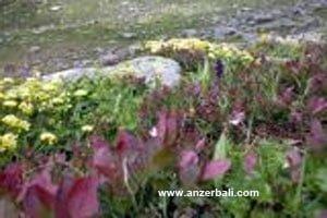 anzer8 211