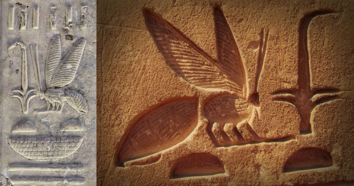 Anzer balı tarihi